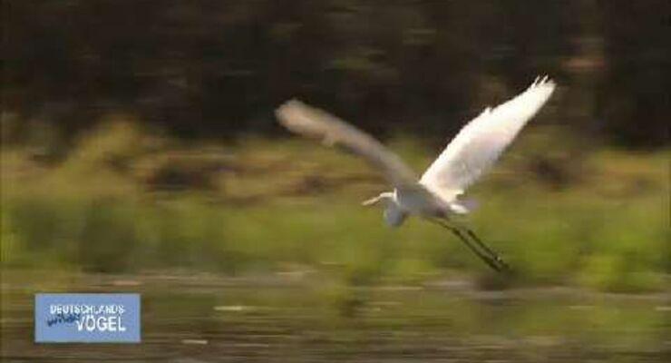 Deutschlands wilde Vögel - Trailer