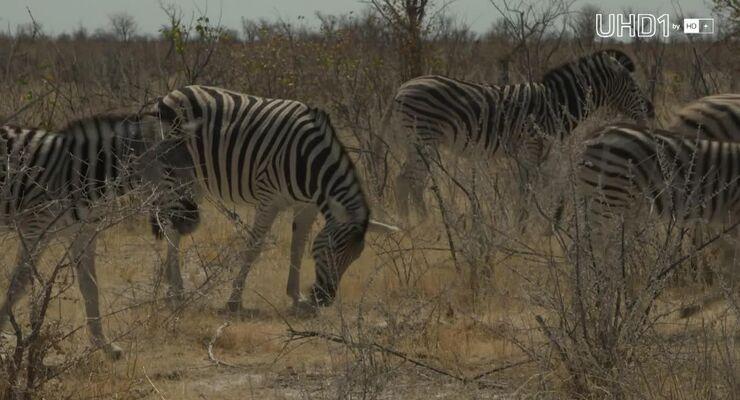 Grenzgänger Teil 3 - offroad durch Afrika