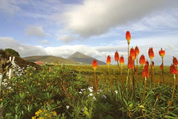 OD 0311 News Irland Achill Island Insel