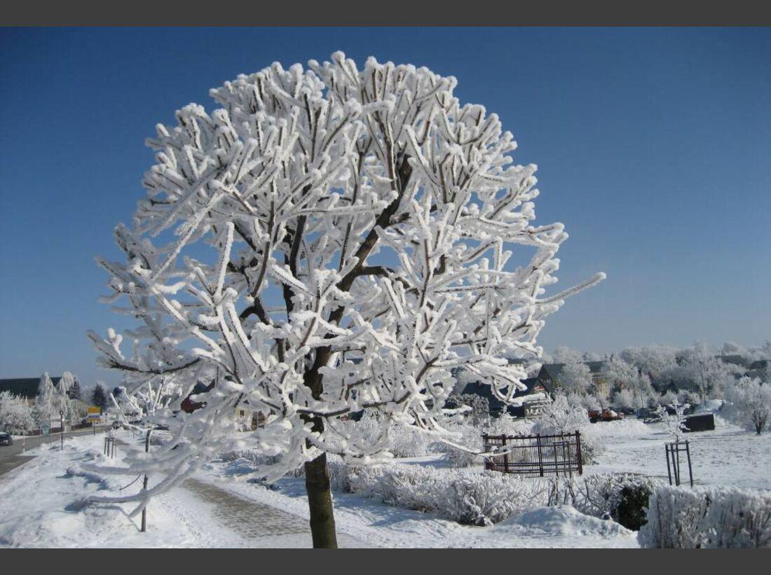 OD 0311_Winterbilder_Katja Unger