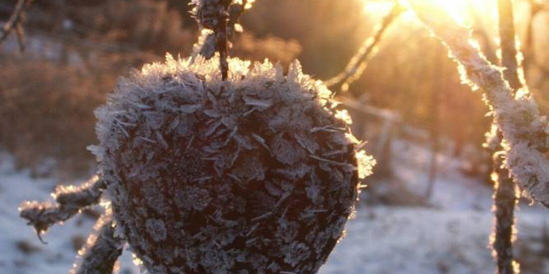 OD 0311_Winterbilder_Sebastian Kirsch