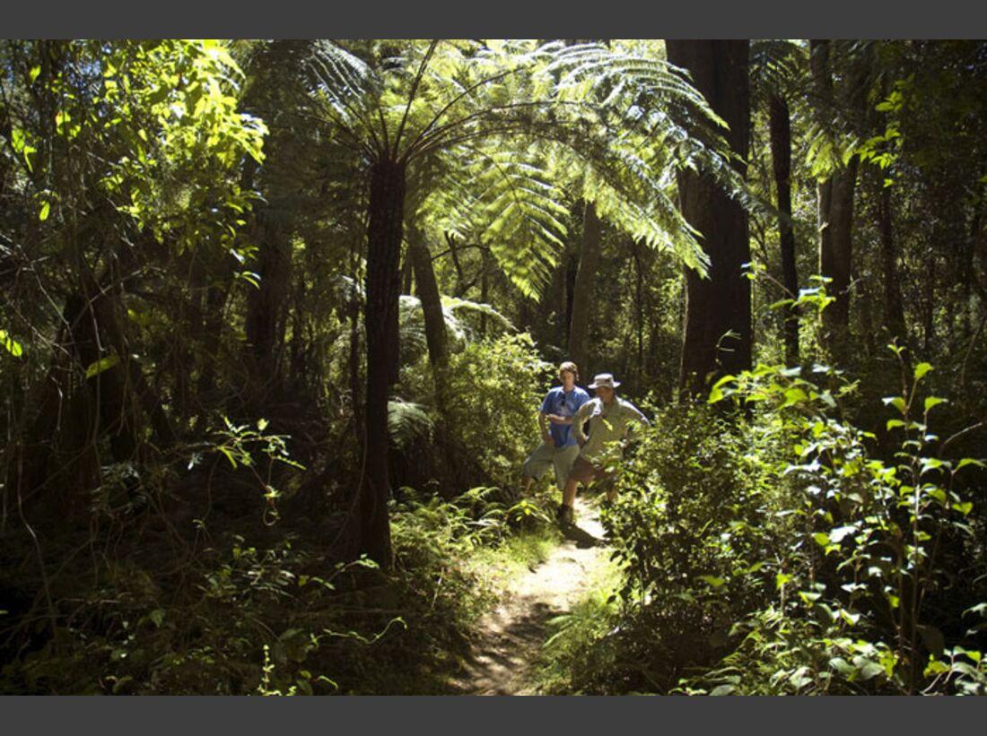 OD 2011 Australien Dschungel (jpg)