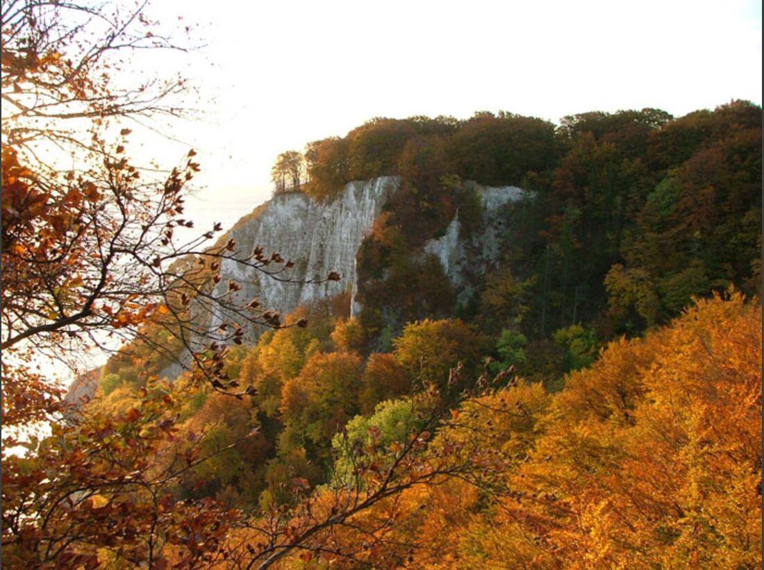 OD Baumwahl 2010 Hangbuchenwald-an-der-Victoriasicht (jpg)