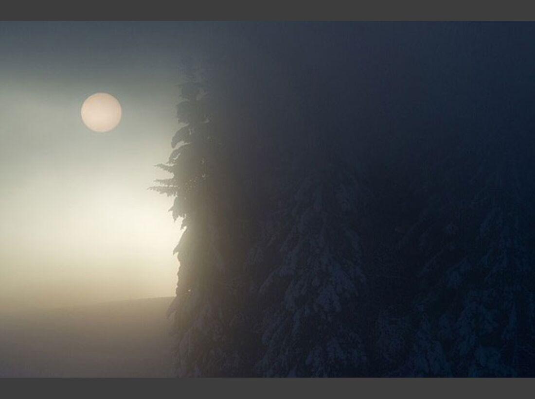 OD_GDT_2012_Lars-Andreas-Dybvik-winterwald (jpg)
