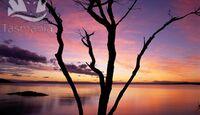 OD Tasmanien Sunset