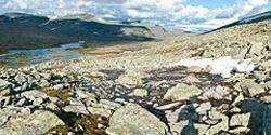 OD Weites Land: Dovrefjell in Norwegen