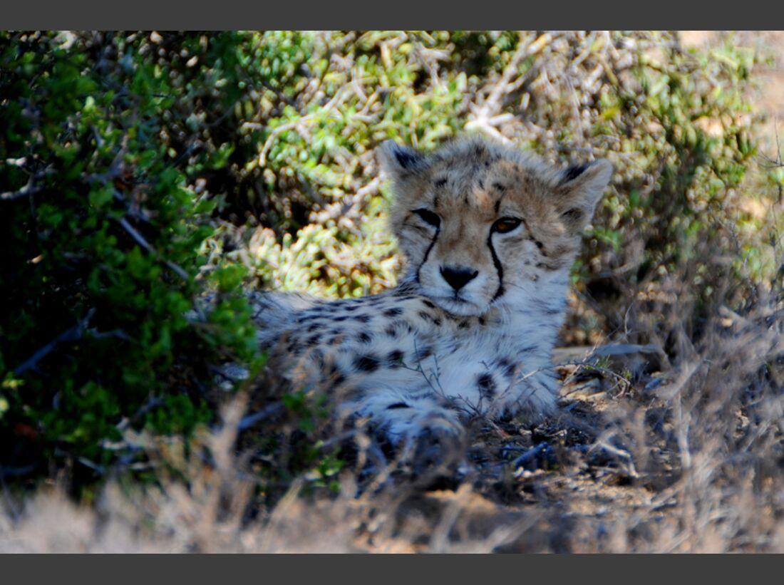 Südafrika zum Durchklicken 68