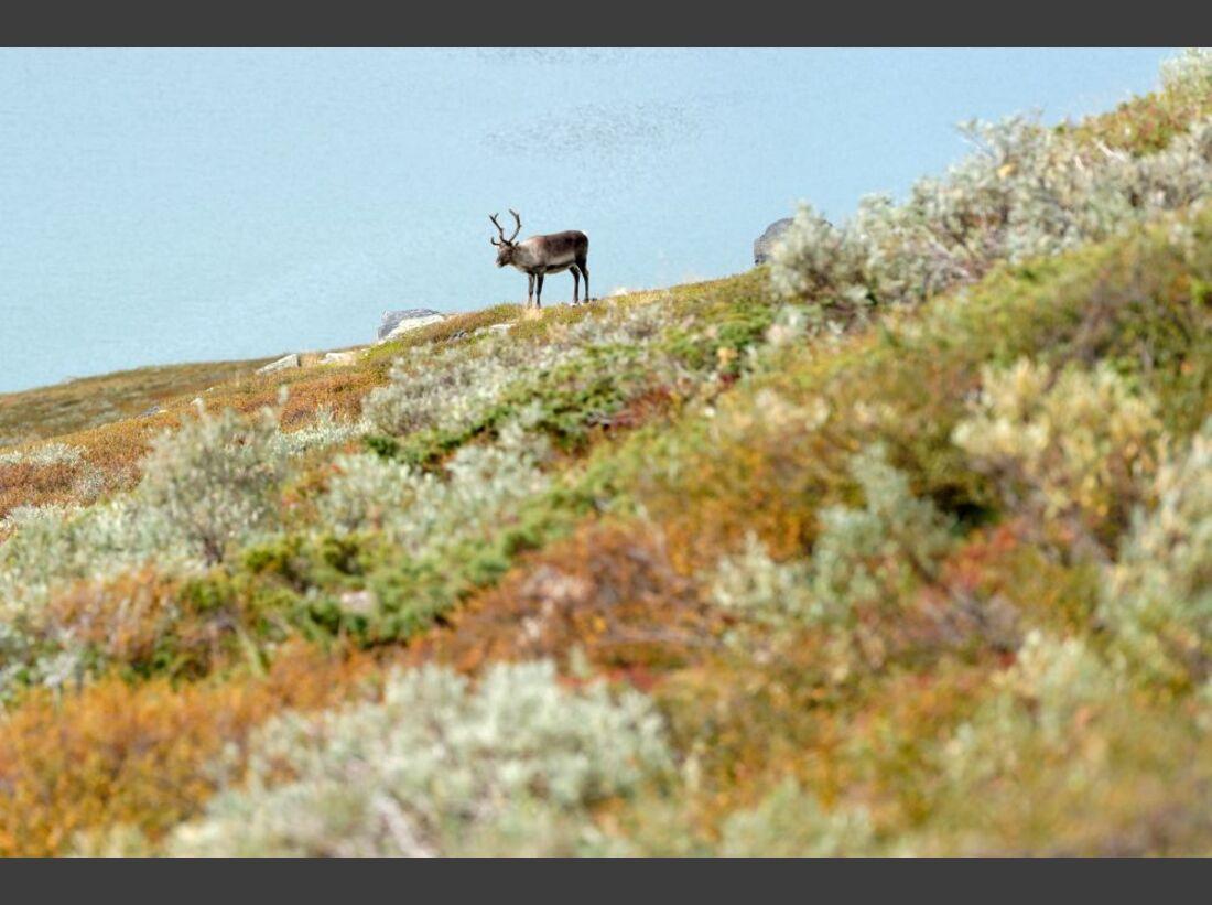 Wildnis-Trekking im Sarek 61