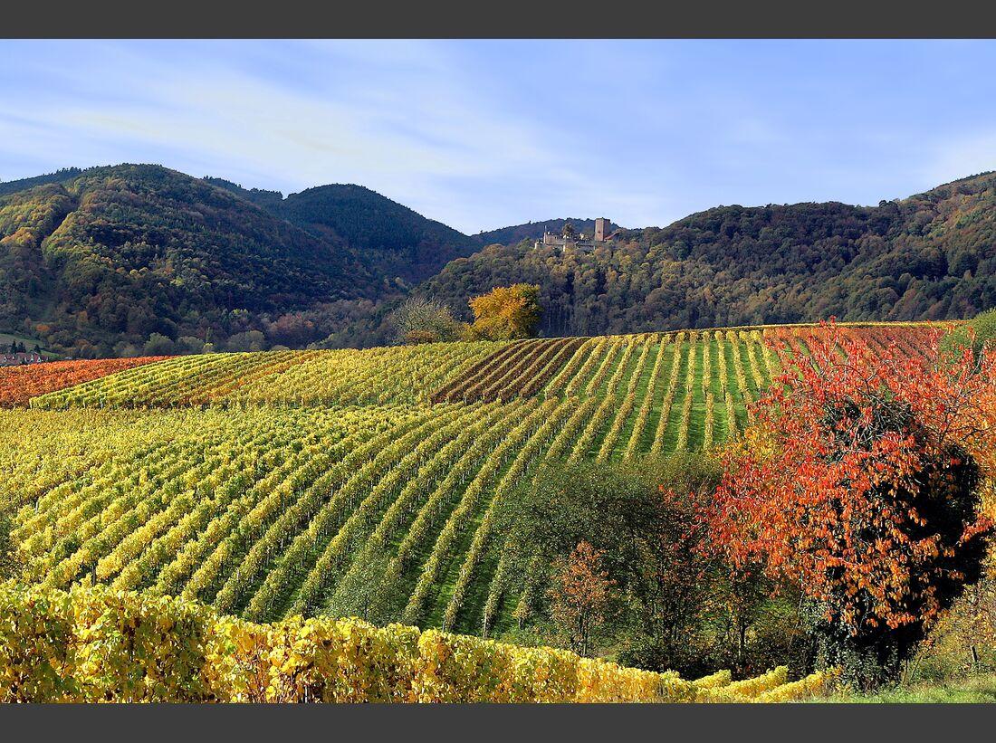 od-2018-herbst-wald-weinpfalz-pfaelzerwald-natur-COLOURBOX27809330 (jpg)